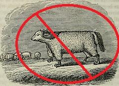 wolfinsheepsclothing